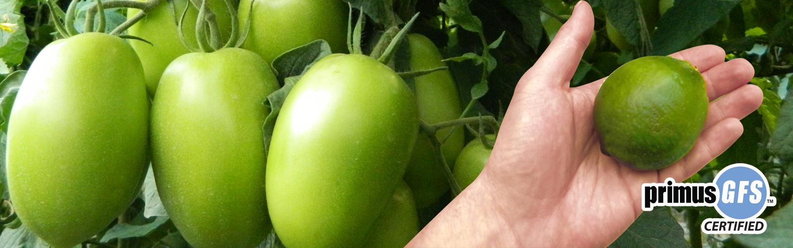 Exportador frutas y verduras