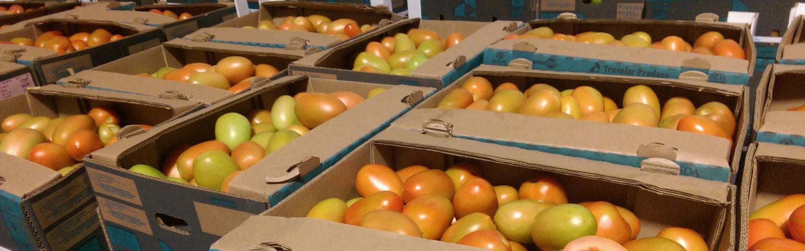 Exportadores de tomate roma 001